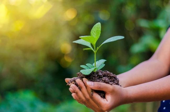 Atividades sobre Meio Ambiente para Educação Infantil